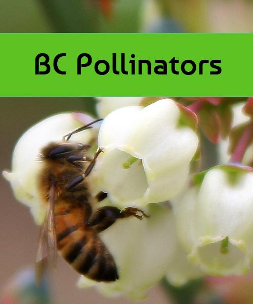 BC Pollinators